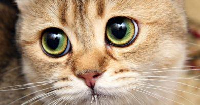 Продолжительность жизни кошек. Как сделать так, чтобы кошка жила дольше